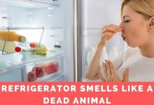 Photo of Refrigerator smells like a dead animal – what you should know about refrigerator smells
